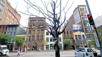 Although many trees are flourishing Downtown, some, such as this one along Smithfield Street near Liberty Avenue, are dead or dying.