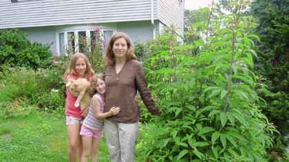 Chatham University weed scientist Nancy Gift and daughters Emily, left, and Hazel with Joe Pye weed, a volunteer that thrives in the front yard of their O&#039;Hara home.