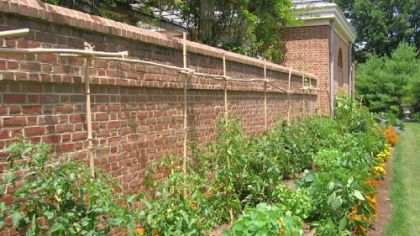 Handmade trellis of bamboo and sisal keeps vegetables growing in an orderly fashion.