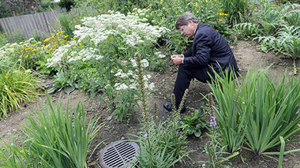 Richard Piacentini reads the identifying tag of a boneset plant in his rain garden.