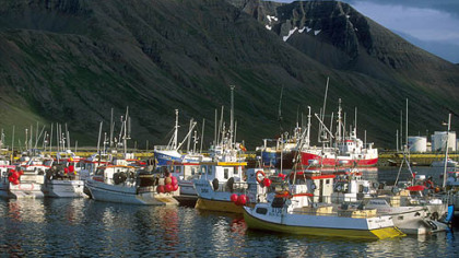 Fishing boats in the Westfjords of Iceland.