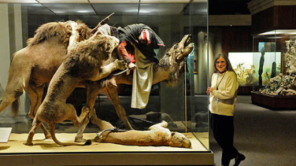 "Suzanne McLaren, manager of the Carnegie Museum of Natural Historys mammal research collection, with the venerable ""Arab Courier Attacked by Lions"" exhibit. It will become the first in a series of Carnegie Memories snow globes."